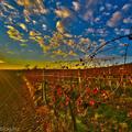 Az egyik legjobb osztrák borvidék: Wachau ősszel