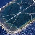 Kékúszójú tonhal hízlalás: A katasztrófa receptje