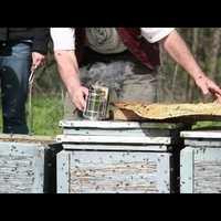 A távolság a méhpusztulás és a minisztérium között