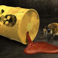 A háziméhek pusztulása: egy ökológiai lecke