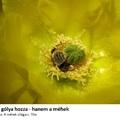 Az alultápláltság, a méhek és az élelmezési világnap