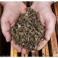 Bayer: Magyar méhek – 0:1 - tudja a német vegyipari cég, hogy mitől pusztulnak a méhek!