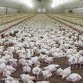 Rovarirtószer a tojásban − Hogyan kerülhetjük el az ilyen baleseteket?