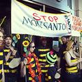 Az EU a szőnyeg alá söpri a méhek és a fogyasztók problémáit