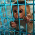 Segíts visszaszorítani az állatkísérleteket