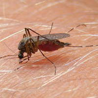 Hamarosan kezdődik a szúnyogirtás – Ma már létezik a vegyszerek helyett hatékony mikrobiológiai eljárás