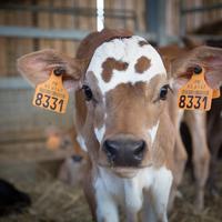 A kevesebb, de jobb minőségű hús- és tejtermék előállítása a kulcsa egy fenntarthatóbb agrárstratégiának