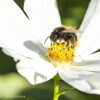 Mi a helyzet a méhekkel?