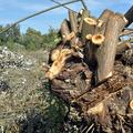 Dunakeszi-tőzegtavak 45 - Újabb fejlemények láp ügyben