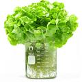 Haltáp mint növénytáp, avagy mi táplálja az emberi hiszékenységet?
