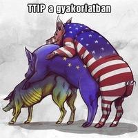 Tiltott GMO Magyarországon? - Kiborult a zöld ombudsman, a TTIP vétóját követelik
