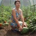 Az orosz organikus kiskertes tanyák (dácsák) mozgalmának története