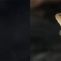 Meghívó egy egyedülálló természetvédelmi eseményre