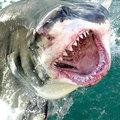 6 méteres cápa gyilkolt