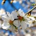 A nap képe: a tavasz biztos jele