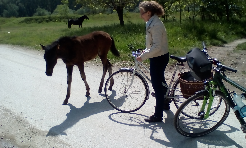 Dunai bringa túra Csillával és csikóval