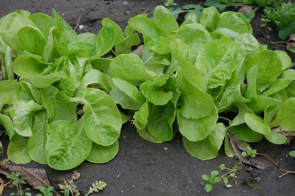 Azok az irigylésre méltó saláták - 2015 október vége