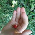 Ausztriai nyaralás a hegyekben - piros bogyók és németül beszélő gyerekek