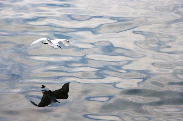 bird-2300148_640.jpg