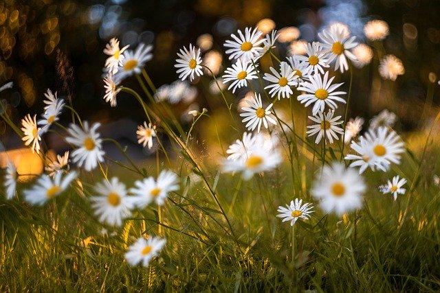 flowers-5479950_640.jpg
