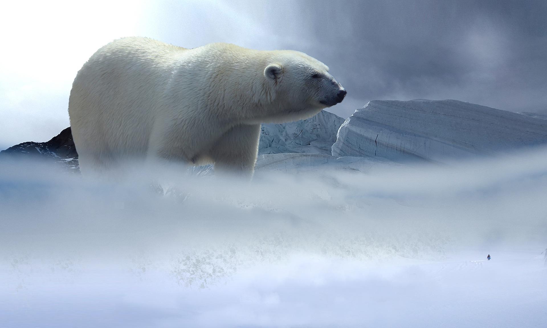 polar-bear-2376928_1920.jpg
