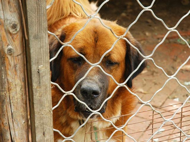 Állatmenhelyeknek írt ki pályázatot a Földművelésügyi Minisztérium