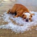 Így óvd meg kutyádat a hőgutától