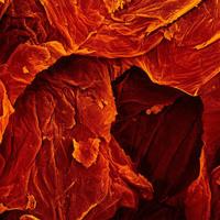 Ételek mikroszkóp alatt