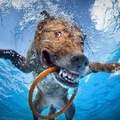Legújabb vízalatti kutyás képek – Seth Casteel