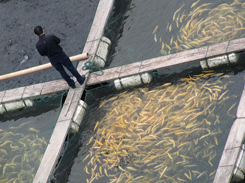 EarthTalkFarmRaisedFish.jpg