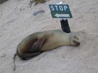 Sea-lions-3.jpg