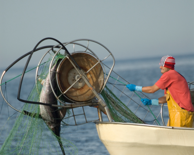 driftnets_aswordfish.jpg