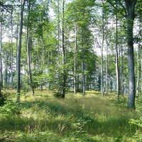 Nyárvégi erdő