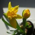 Tavaszi