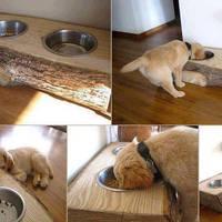 13 praktikus ötlet kutyabarátoknak