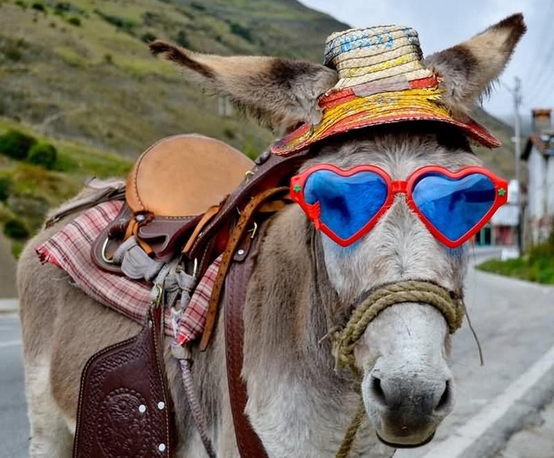 funny_donkey_1498843618.jpg