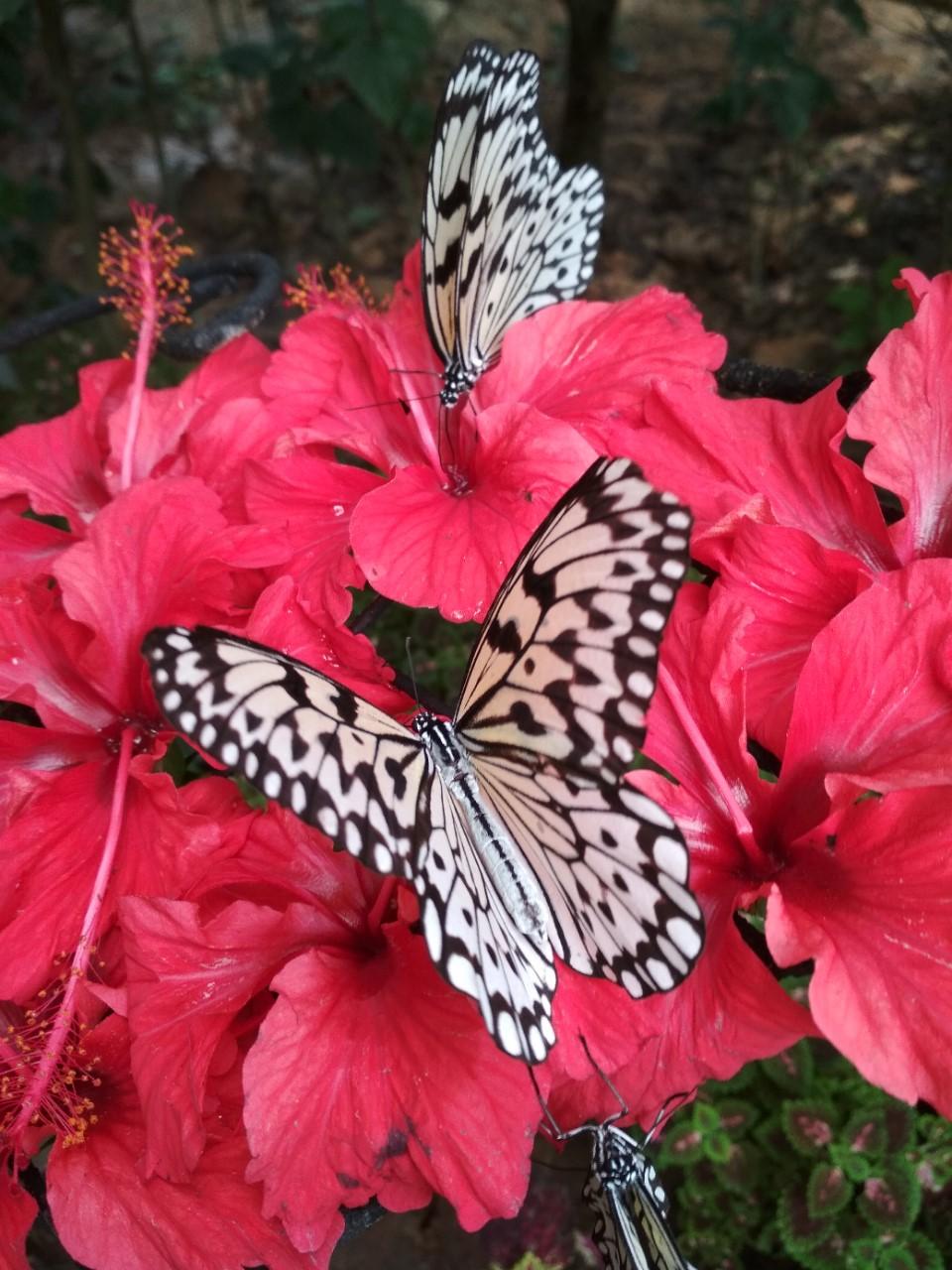 pillangopark_1.jpg