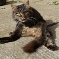 Rég látott cicák és CunciMókus képei