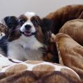 Egy ágyban a kutyámmal - szabat ilyet?