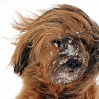 Védjük meg kutyánkat a hideg okozta veszélyektől!