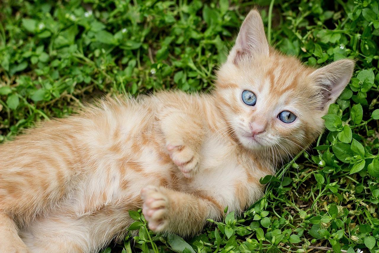 tabby-kitten-1517450_1280.jpg