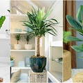 A panellakások 5 elpusztíthatatlan szobanövénye