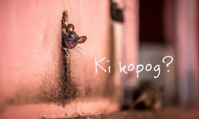 ki_kopog_ugynokok.jpg