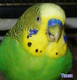 papagaj50_1.jpg