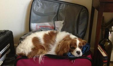 14 állat, aki nem érti, hogy miért nem viszed el magaddal nyaralni