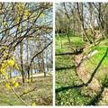 Tavaszköszöntő túra Tatán, a csodaszép Angolkertben