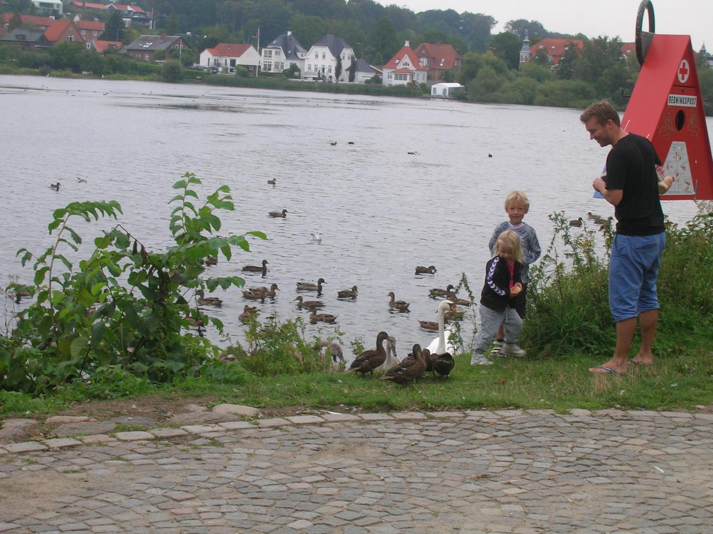 Délutáni kikapcsolódás a Koldinghus nevű vár mellett elhelyezkedő tó partján. Apuka és a gyerekek ismerkednek a kíváncsi kacsákkal. - (Fotó: Könyves Viki)