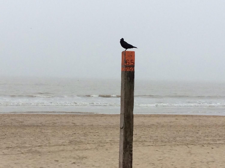 Télen a parton csak a madár jár. - (Fotó: Békési Barbara)