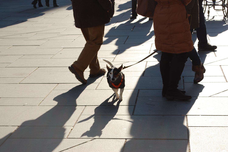 Fiatalok – kutya – Az osztrákok nagy kutyabarátok; annak ellenére, hogy elég drága szórakozás itt háziállatot tartani. És a kutyák lépten-nyomon ott vannak a gazdik mellett: elkísérik őket nemcsak sétálni, hanem az üzletekbe, sőt egyes éttermekbe, kávézókba is, ez itt mindennapos és megszokott látvány. (sétálóutca, Bécs) - (Fotó: Laslavic Tímea)