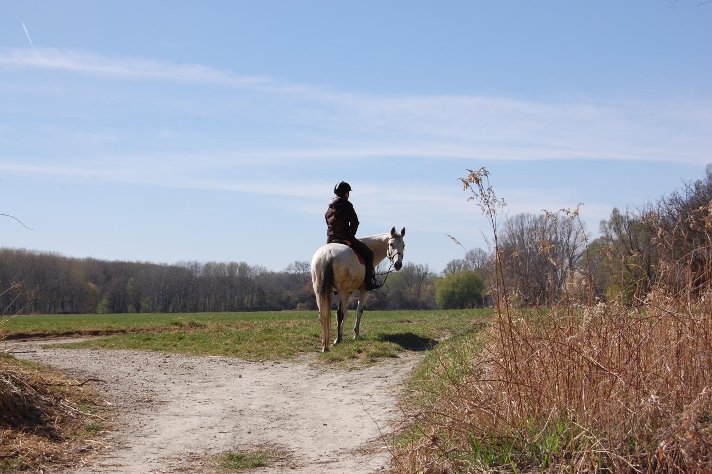 Lovon – Minden Bécs környéki erdőben, parkban, de a falvakban is, az utcákon találkozni délutánonként, hétvégénként lovagló osztrákokkal. A sízés, túrázás, biciklizés és kutyasétáltatás mellett az ittenieknek ez az a másik kedvenc (és költséges) hobbijuk.  (Dunapart és erdő, Fischamend) - (Fotó: Laslavic Tímea)